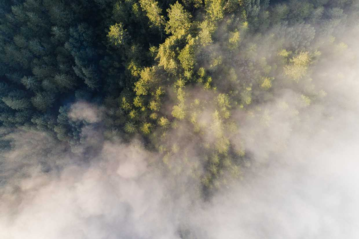 Birds-eye foggy forest
